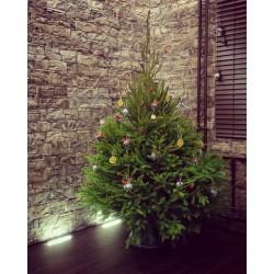 Kalėdinė eglutė (150-170)
