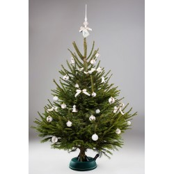 Gyva kalėdinė eglutė (240-280)