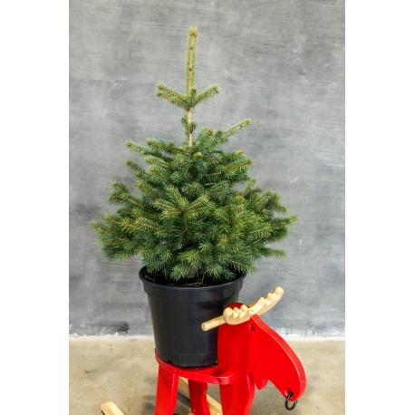 Kalėdinė sidabrinė eglutė vazone (70 cm)